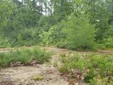Wooded lot within minutes to Balch Lake and Balch Lake Marina